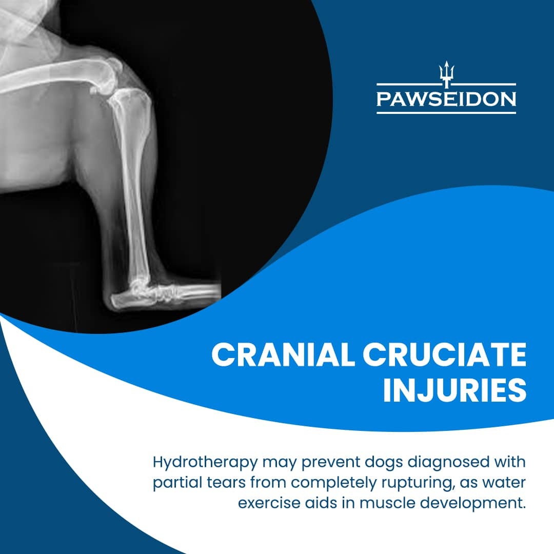 Cranial Cruciate injuries in Dogs